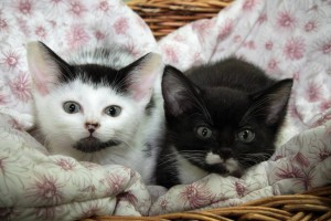 Kawerau SPCA Kitten Photo
